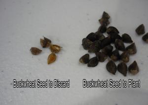 Good and Bad Seed