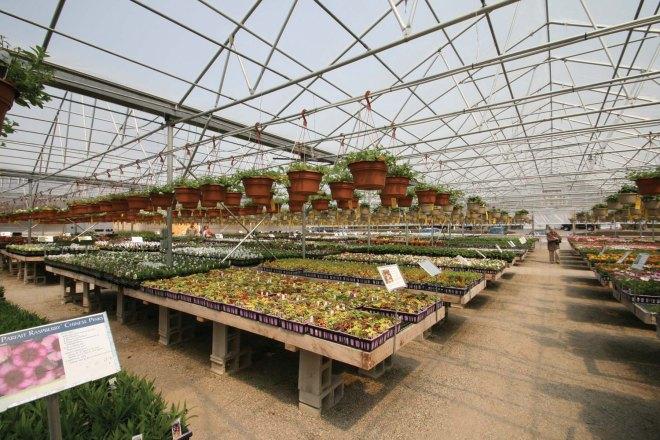Commercial crop production
