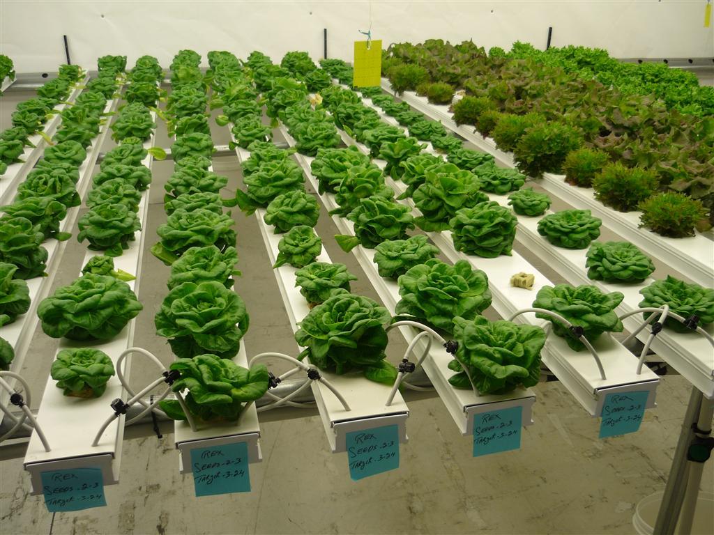 Оборудование для выращивания ягод 38