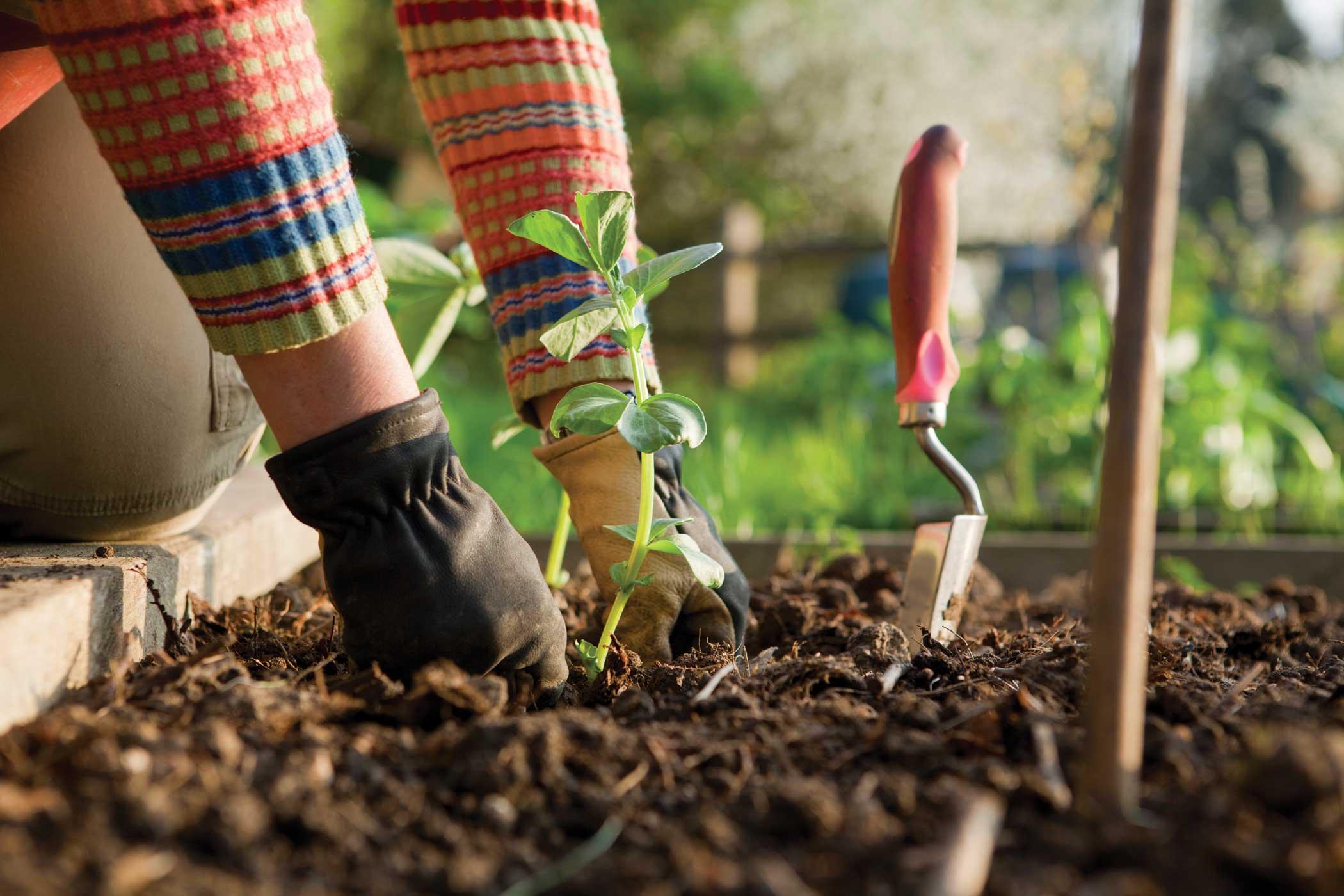 BACKGROUND-gardening